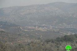 مستعمرون متطرفون يستخدمون الأراضي الزراعية الفلسطينية مراعي لمواشيهم