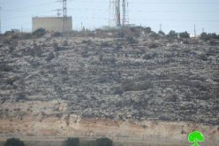Colonists of Elkana destroy 140 olive trees in Az Zawiya
