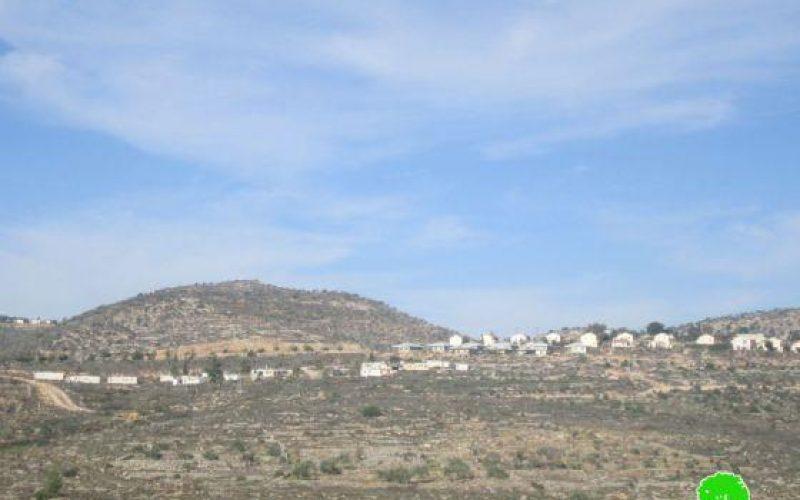 إتلاف 56 شجرة زيتون عبر رشها بمواد كيميائية في قرية بيتلّو / محافظة رام الله