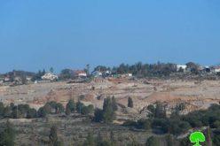"""مستعمرو """"زوفين"""" يتلفون 40 شجرة زيتون ويردمون بئراً في قرية جيوس /محافظة قلقيلية"""