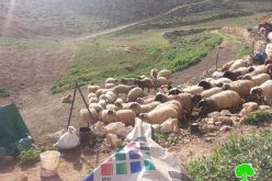 Vicious attack on Khirbet Jouana (12 structures demolished)