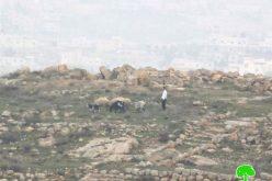 مستعمرون يهدمون خيمة ويعتدون على المزارعين في خربة سوسيا