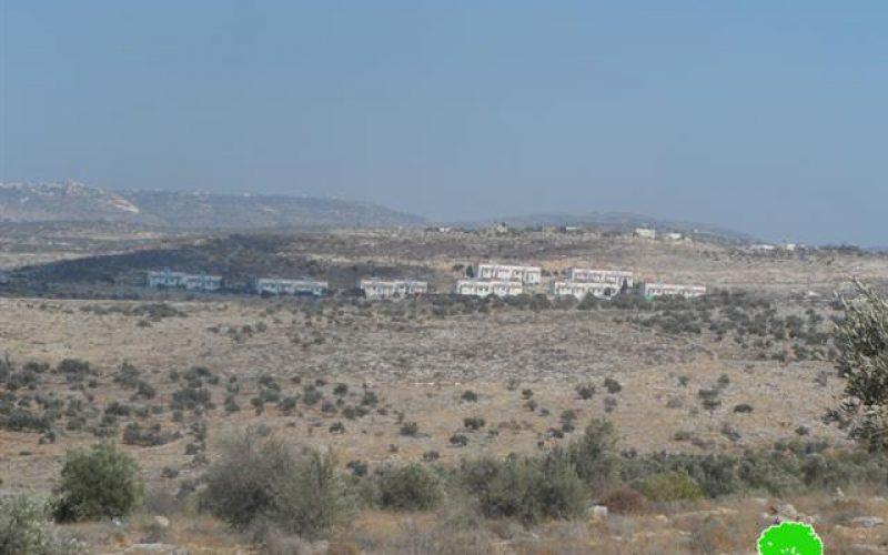 """مستعمرو """" آفني حيفس"""" يتلفون 26 غرسة زيتون في قرية شوفة"""