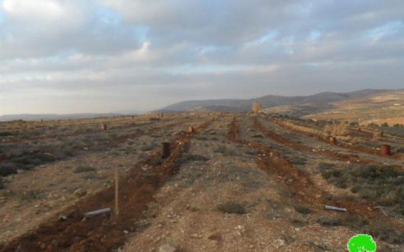 Shilo colonists damages 600 olive seedlings