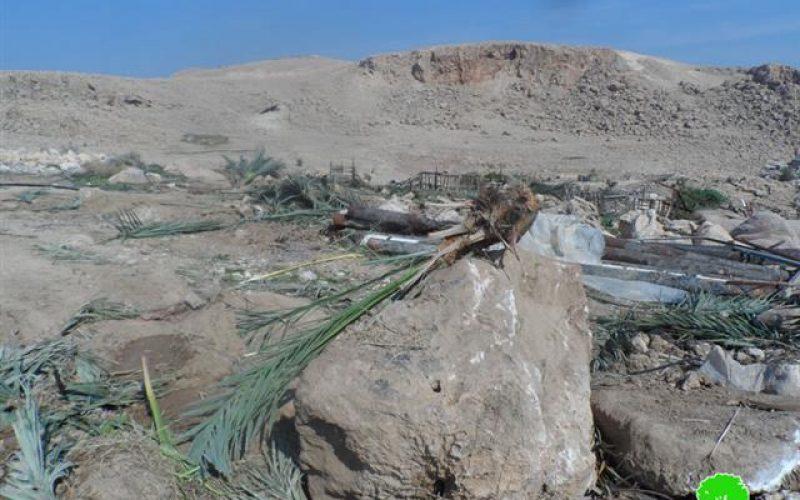 The Israeli occupation cuts down 120 palm trees in Az Zubeidat
