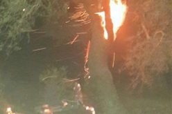 Roman olive trees torched in Quryut
