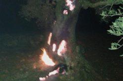 حرق أشجار زيتون رومية في قرية قريوت