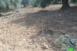 """مستعمرو مستعمرة """" تلمون"""" يتلفون 58 غرسة زيتون في قرية رأس كركر"""