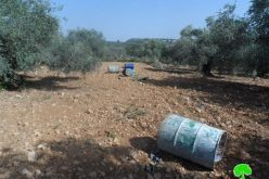 Destroying 51 olive seedlings in Ras Karkar