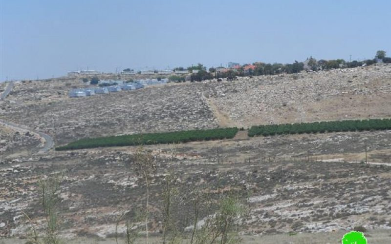 Setting Fire to Wheat Crop in Deir Jarir village – Ramallah Governorate