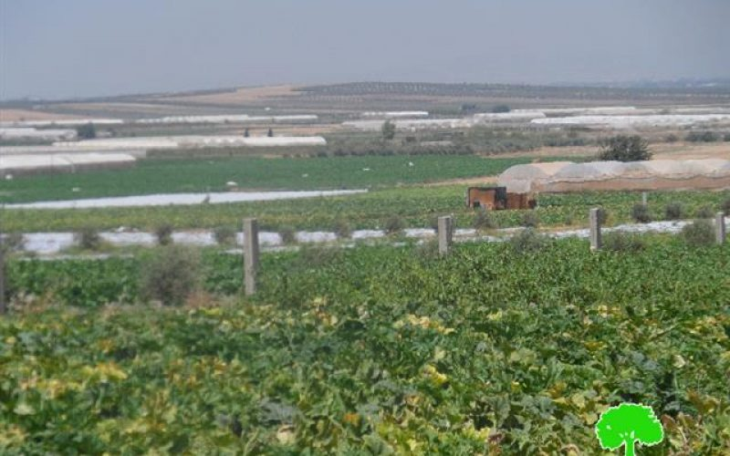 The Israeli occupation confiscates eight tractors