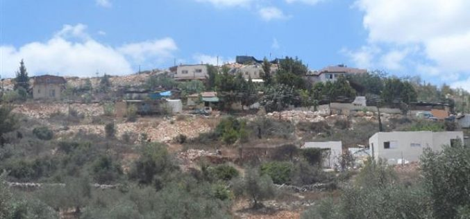 "Trees cut off by ""Maale Israel"" colonists in Bani Hassan village"