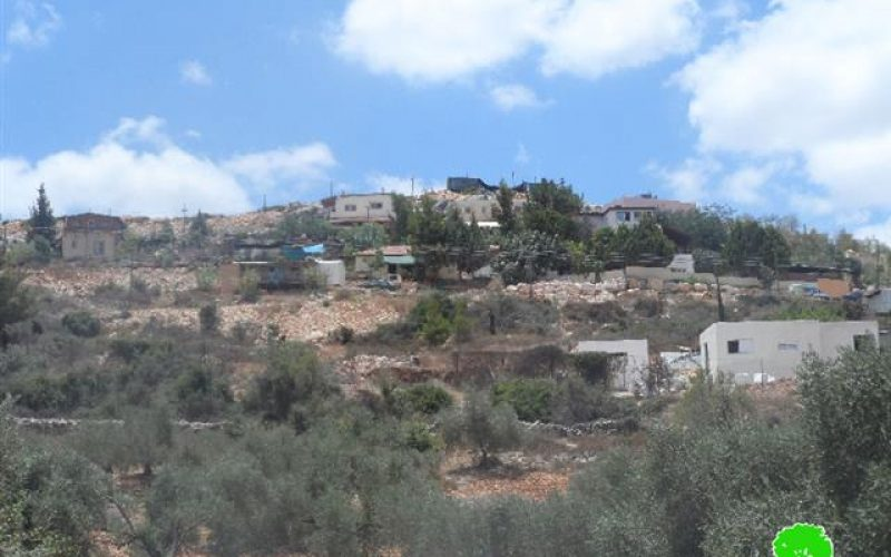 """Trees cut off by """"Maale Israel"""" colonists in Bani Hassan village"""