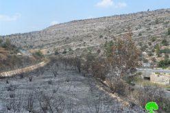 إحراق 30 شجرة زيتون معمرة بشكل كلي في قرية دير ابزيع / محافظة رام الله