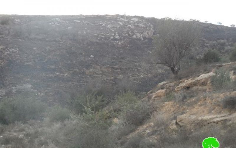 Yitzhar colonists set fire to 130 olive trees in Huwara
