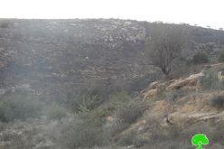 """مستعمرو مستعمرة """"يتسهار"""" يحرقون 130 شجرة زيتون في بلدة حوارة"""