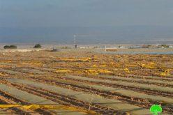 الاحتلال الإسرائيلي يدمر 75 دونماً زراعياً في منطقة المنطار