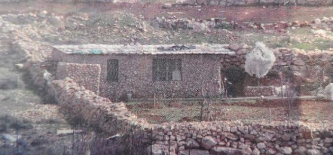 The Israeli occupation ravages a land and uproots trees in Hebron