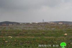 """مستعمرو """" عادي عاد"""" يتلفون 5000غرسة زيتون في بلدة ترمسعيا / محافظة رام الله"""