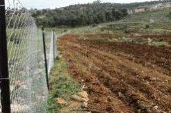 المستوطنون الاسرائيليون يعتدون على أراضي فلسطينية تم استصلاحها ضمن مشروع نفذه معهد الابحاث التطبيقية – القدس (أريج) في قرى شمال غرب القدس
