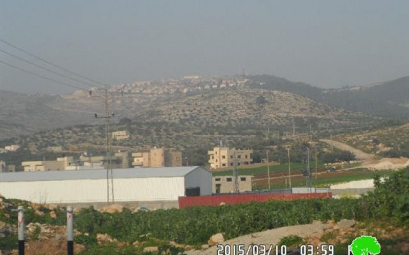 Under the pretext of preserving nature: the Israeli occupation ravages 300 olive saplings in Nablus