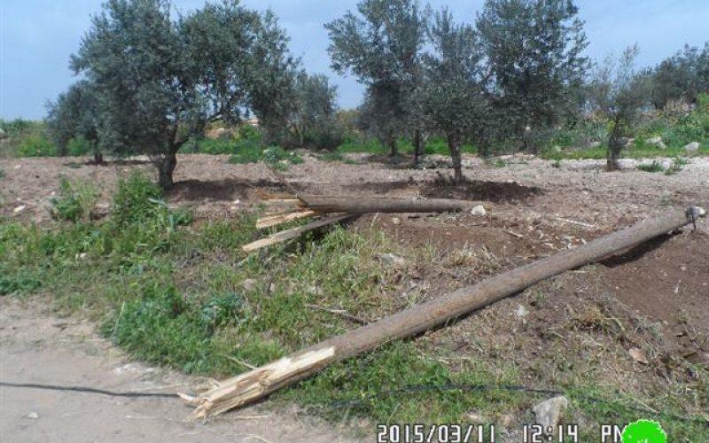 الاحتلال يدمر 8 بركسات سكنية وزراعية وشبكة كهرباء في قرية زبدة / محافظة جنين