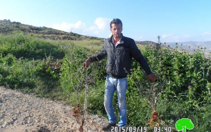 Retaining walls demolition and trees uproot in the Nablus village of Majdal Bani Fadel