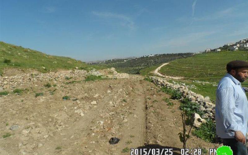 Halmish colonists sabotage 20 olive saplings in Deir Nitham