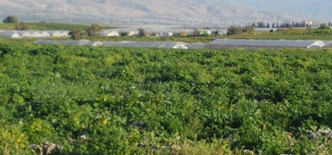 The Israeli occupation confiscates 504 meters of water pipelines from Tubas