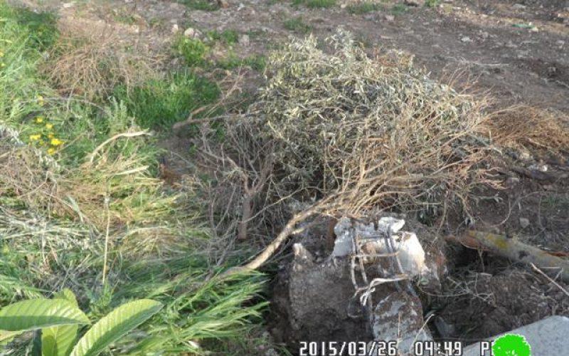 Dumping an artisan cistern and demolishing retaining walls in Tanak village