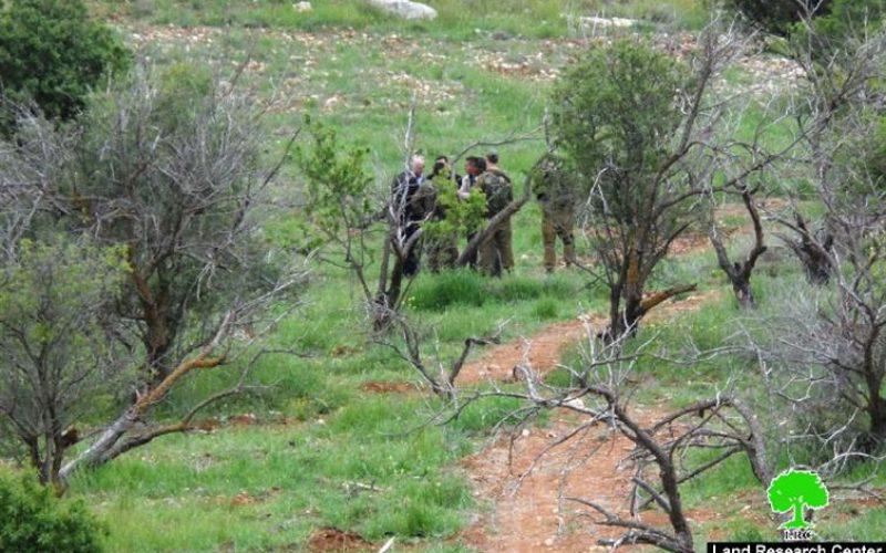 ضمن الهجمة العدوانية على الزيتون الفلسطيني, مستعمرون يقتلعون 1200 شتلة زيتون ولوزيات من أراضي بلدة الشيوخ