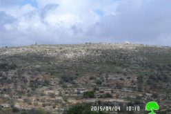 Establishing farms relative to Tapuah colony on lands from Salfit governorate