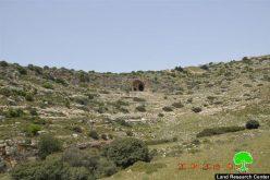 قطع وسرقة 520غرسة زيتون وتين في بلدة ديرستيا / محافظة سلفيت