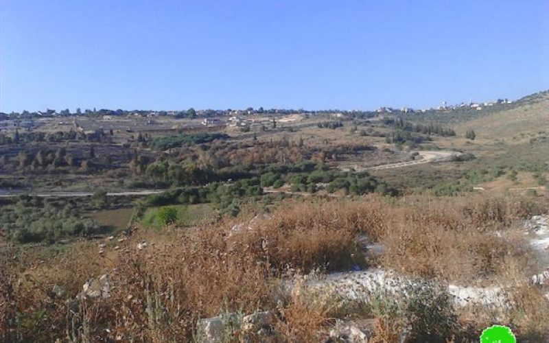 Colonists set fire to olive trees in the Tulkarm village of Kfar Sur