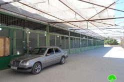 The Israeli occupation hinders the opening of Beit Ummar municipal market
