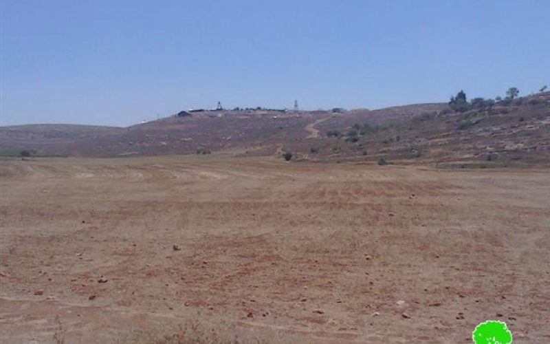 Yesh Kodish colonists sabotage 13 dunums of wheat crops in Nablus