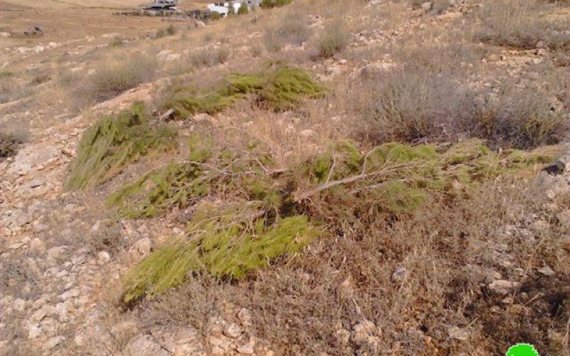 الاحتلال الاسرائيلي يدمر محمية طبيعية في طوباس