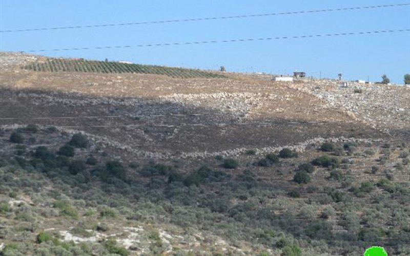 """مستعمرو """" تفوح"""" يتلفون 38 شجرة زيتون مثمره في أراضي بلدة جماعين"""