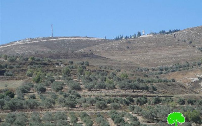 Yizhar colonists torch 15 olive trees in the Nablus village of Burin