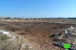 جيش الاحتلال يقدم على قلع وسرقة 280 غرسة في قرية رأس عطية / محافظة الخليل