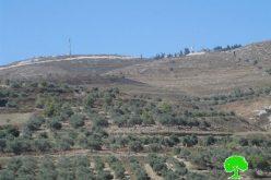 مستوطنو يتسهار يتسببون في إحراق 15 شجرة زيتون في قرية بورين