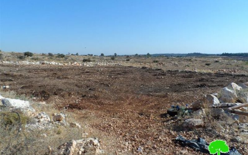 The Israeli occupation army uproots 280 seedlings in Qalqiliya governorate