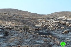 Israeli colonists torch vast area of lands in Ramallah governorate