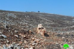 Givat Ronen colonists torch pastures and olive groves in Burin village