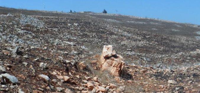 """مستعمرو """" جفعات يعقوب"""" يحرقون المراعي وأشجار زيتون في قرية بورين"""