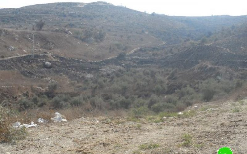 Colonists escalate attacks on Nablus agricultural lands