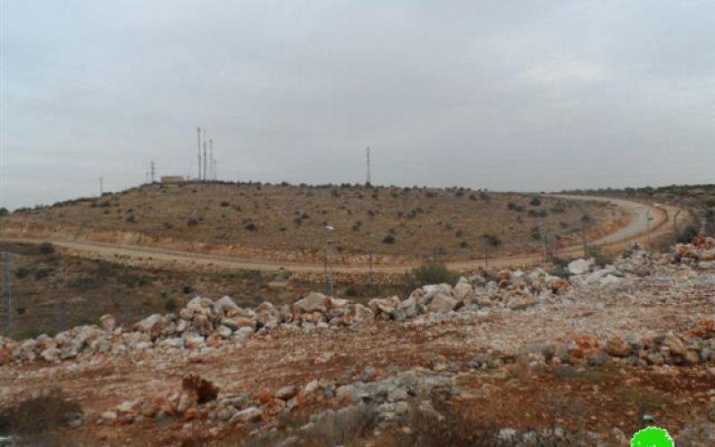 """مستعمرو مستعمرة """" الكانا"""" يقطعون 60 شجرة زيتون مثمرة  في بلدة الزاوية"""