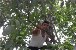The Israeli Occupation Forces sweep a plot and uproot trees in Al-Arrub camp