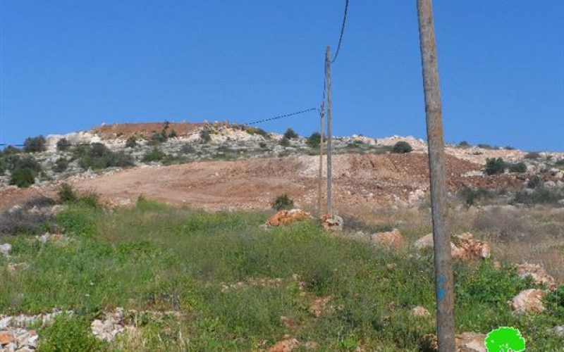 Ravaging lands and uprooting 160 olive trees to expand  Leisham colony