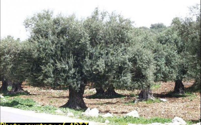 Israeli Aggression Against Palestinian Agriculture